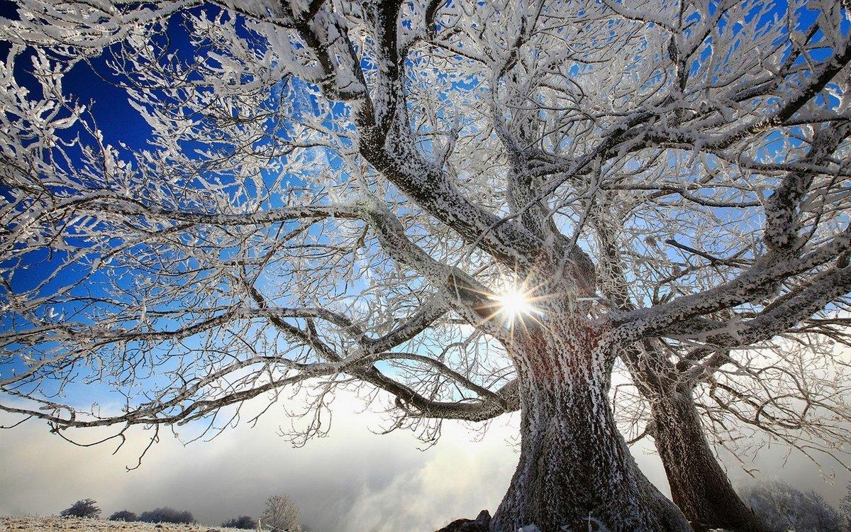 Куда исчезают деревья зимой?