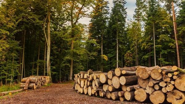 В мире наблюдается дефицит древесины и причин много
