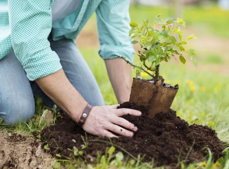 Миллиард деревьев высадят в Австралии к 2050 году ради спасения климата