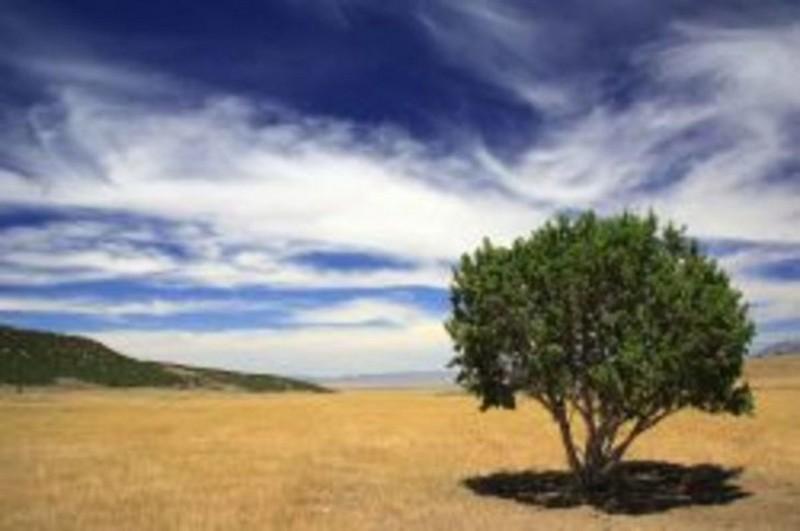 В условиях засухи деревья издают сигналы бедствия