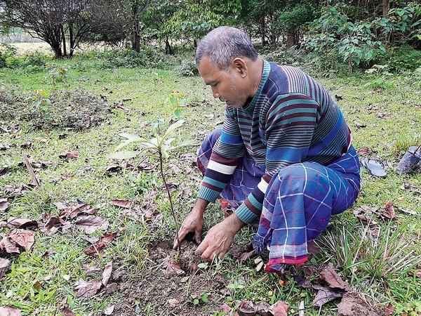 Индиец Джадав Пайенг 40 лет высаживает деревья в пустыне