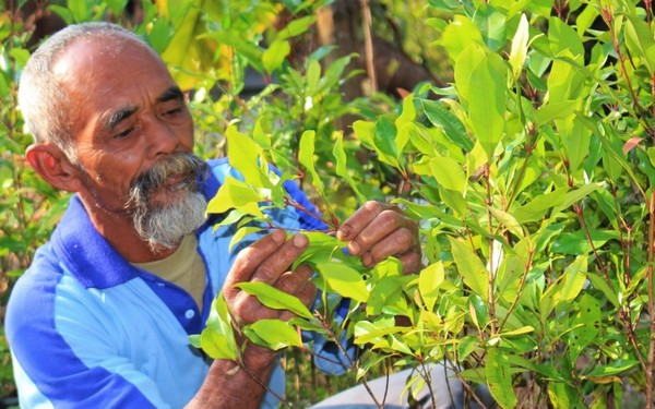 Индонизиец превратил в зеленый оазис засушливые холмы, высадив 11 тысяч деревьев