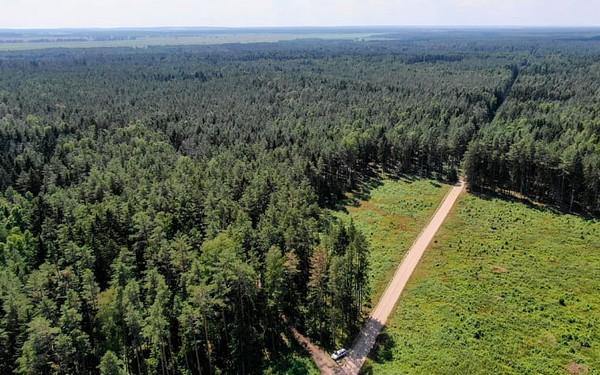 Лесистость в Беларуси достигла исторического максимума