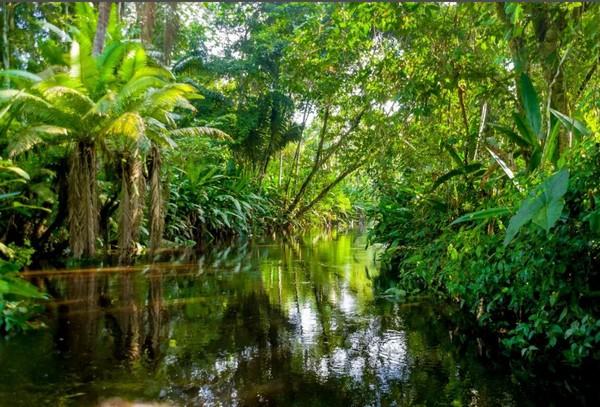 Леса Амазонии незаконно продают через Facebook