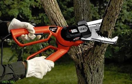 Правильная обрезка деревьев. Советы специалистов