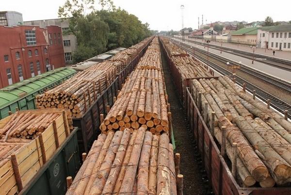В Республике Беларусь вводятся новые ставки таможенных пошлин на древесину