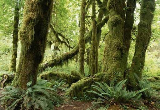 Стволы деревьев могут рассказать о том, как люди повлияли на окружающий мир