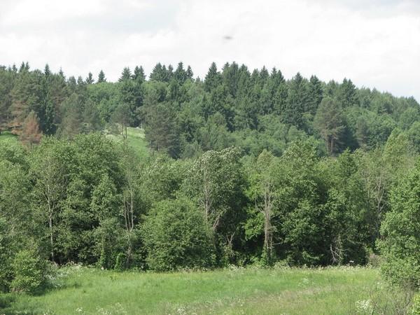 Площадь российских лесов увеличивается