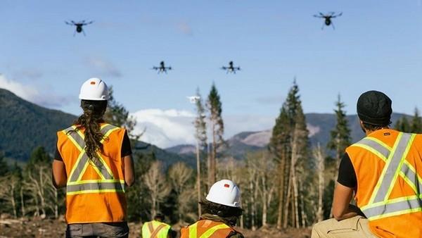 В Канаде собираются высадить с помощью дронов миллиард деревьев