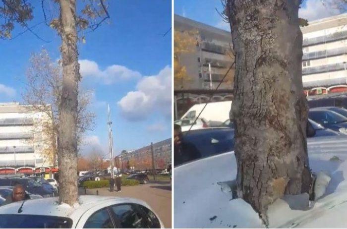 Растущее дерево пронзило автомобиль во Франции