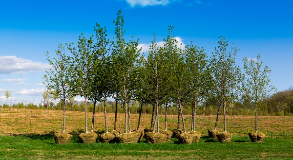 В Украине будет выполнена президентская программа по высадке одного миллиарда деревьев