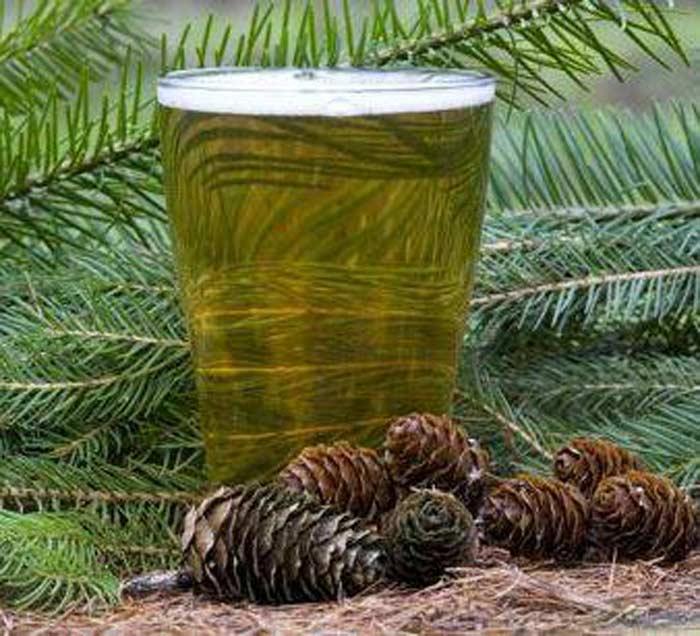 Создали уникальный алкогольный напиток из деревьев в Японии