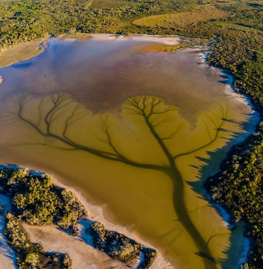 Мужчине удалось прославиться благодаря фотографиям озера. Чайное дерево создало автопортрет, однако оно не получит за это награду