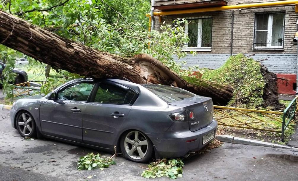 Что делать если на машину упало дерево, подробное описание.
