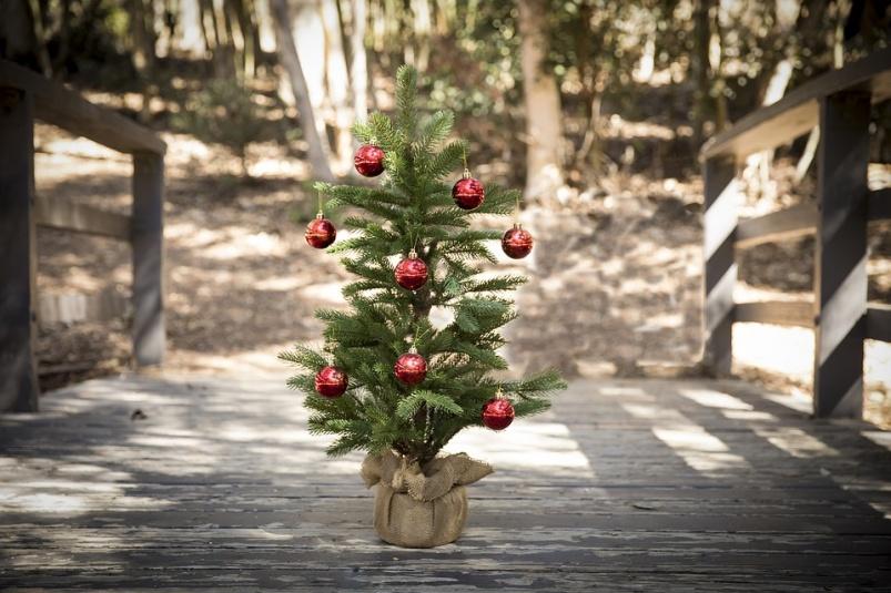 Как поступить с натуральной елью по окончании нового года?