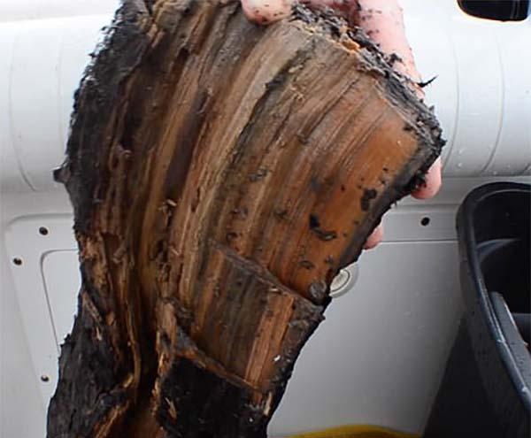 Доисторический подводный лес возрастом 60 000 лет в Мексиканском заливе - новое научное открытие.