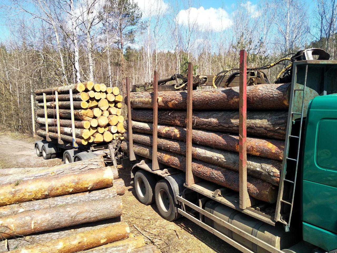 Что нужно знать, перед тем как выбирать себе помощника по лесной сертификации?